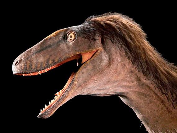 Рапторекс Креґштейна (Raptorex kriegsteini Sereno et cet, 2009) - найдревніший із Тиранозаврових. Джерело: http://www.news.nationalgeographic.com