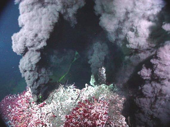 Чорний курець або палій. Джерело: http://www.oceanexplorer.noaa.gov