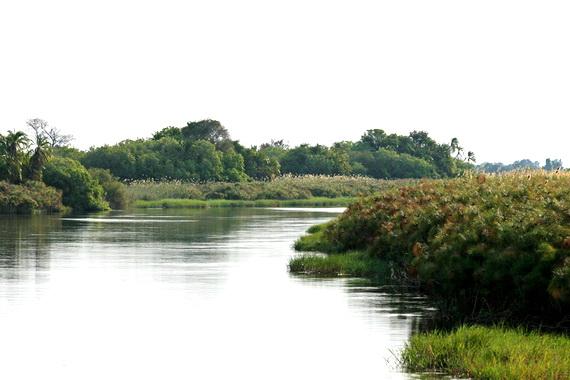 Ріка Окаванґо перед впадінням у дельту. Джерело ілюстрації: http://www.panoramio.com