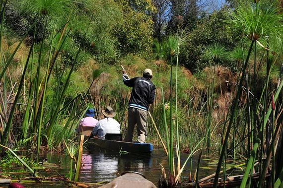 Туристичний маршрут через зарості Папірусу (Cyperus papyrus L.). Джерело ілюстрації: http://www.panoramio.com