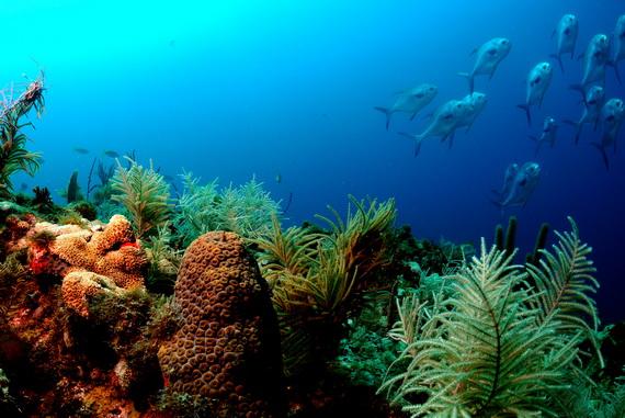Кораловий риф біля узбережжя флориди