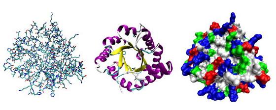 Моделі білків