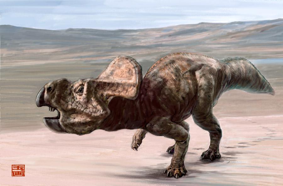 protoceratops_st_naturalist
