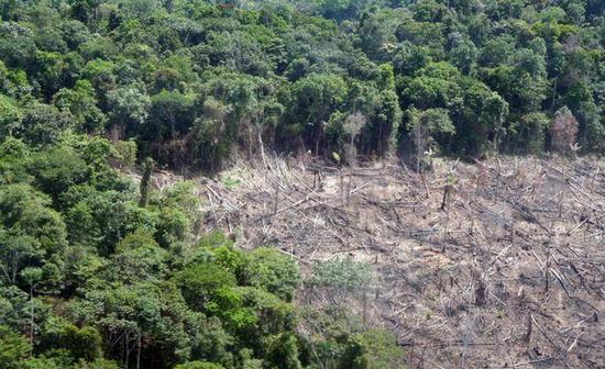 Зруб у тропічному лісі