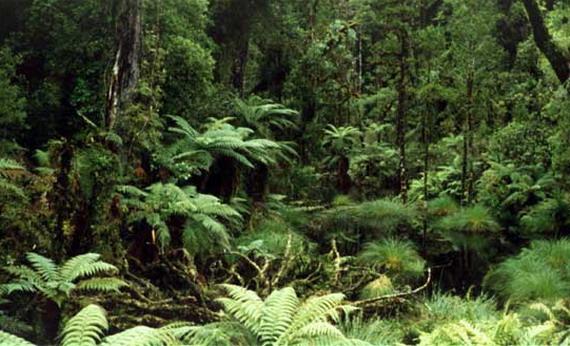 У лісах мезозойської ери, поруч із динозаврами, ховаючись, жили перші звірі