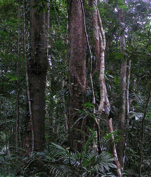 Дощовий тропічний ліс