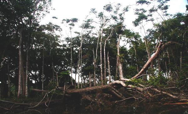 Тропічний ліс Конґо