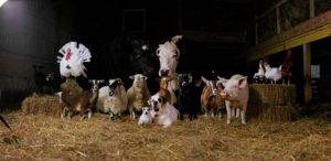 Кінець ери скотарства