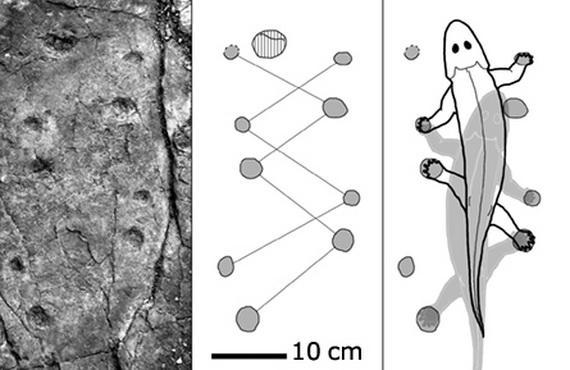 Відбитки слідів і реконструкція руху древньої тварни. Джерело: http://www.sciencenews.org