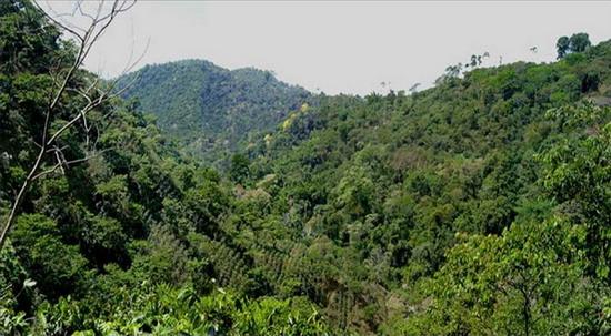 Кавову плантацію у південній Мексиці захопив вторинний дощовий тропічний ліс