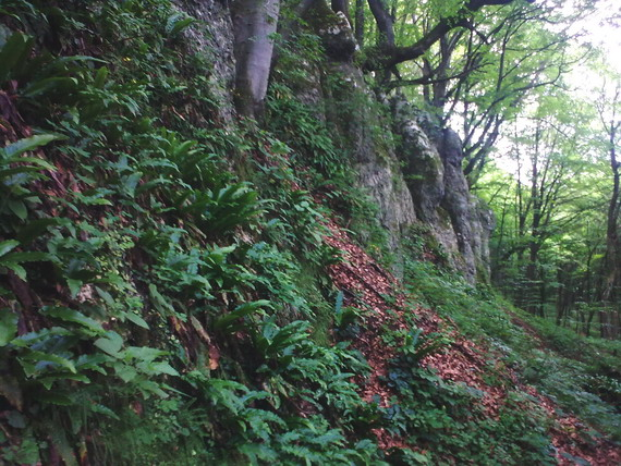 Мединські скелі тягнуться суцільною стіною