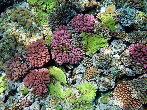 Відновлення коралового рифу