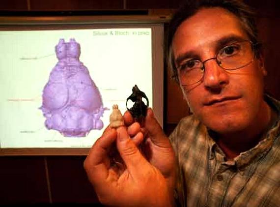 Череп і модель мозку Іґнаціуса ґрайбулійського (Ignacius graybullianus Rose, K. and Gingerich, P. 1977). Джерело: http://www.theallineed.com