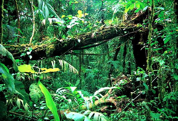 Усіх рослин і тварин тропічного лісу