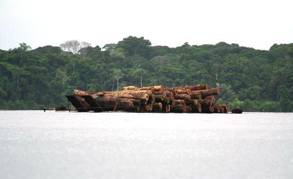Вивезення деревини з лісів Конґо