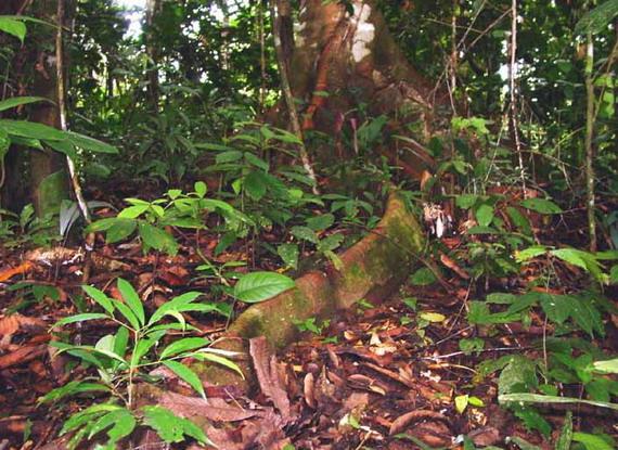 Під шатром дощового тропічного лісу