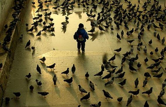 Відкрий світ птахів... Джерело: http://www.trekearth.com