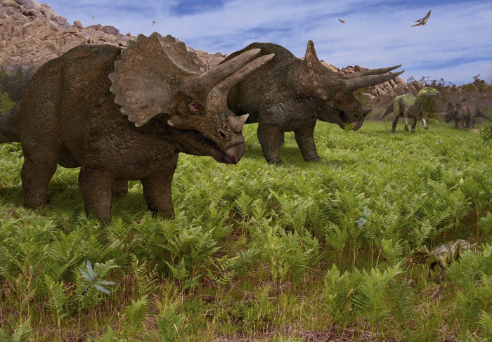 triceratops_st_naturalist