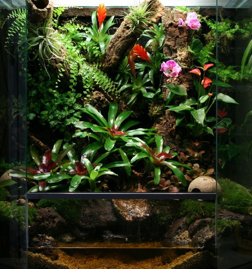 Тропікарій з орхідними і бромелієвими