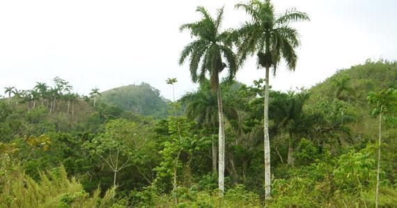 """Екологічний заповідник """"Варагікакос"""", Куба. Джерело ілюстрації: http://www.netssa.com"""