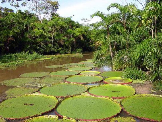 Екосистема амазонського дощового тропічного лісу вражає всоїм багатством