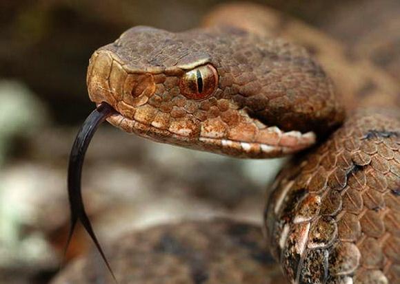 "Результат пошуку зображень за запитом ""змії"""