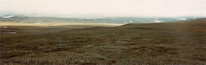 Тундра є бідною на біологічні види, і представлена дуже простою екосистемою