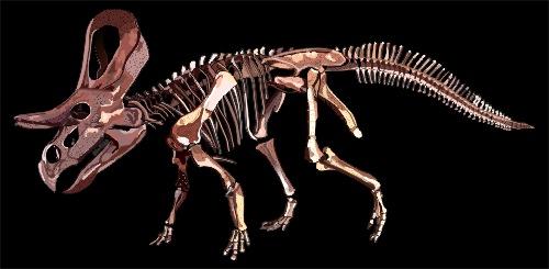 zuniceratops_st_naturalist